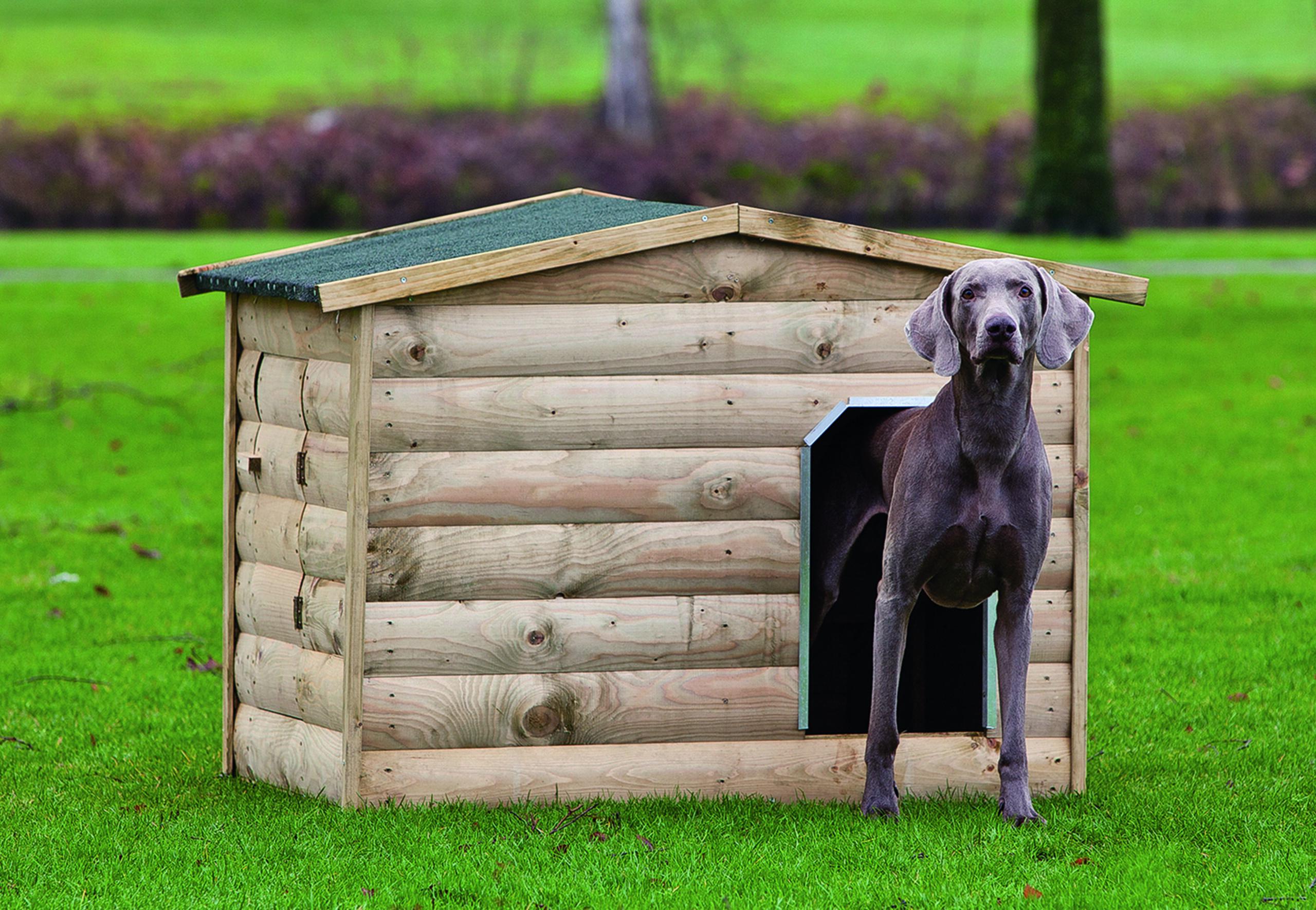 Labrador – Dog Kennel